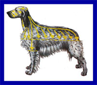 a well breed English Setter dog