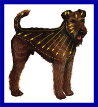 a well breed Irish Terrier dog