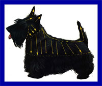 a well breed Scottish Terrier dog