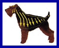 a well breed Welsh Terrier dog